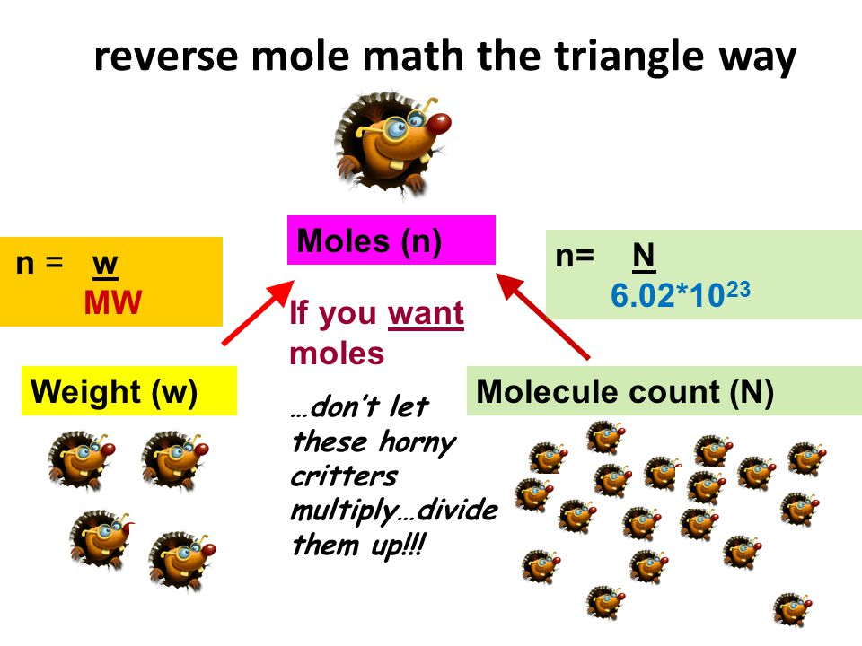 reverse mole math the triangle way Moles (n) Weight (w)Molecule count (N) n = w MW If you want moles …dont let these horny critters multiply…divide th