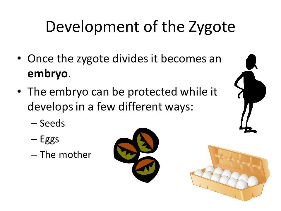 Eggs Amniotic egg