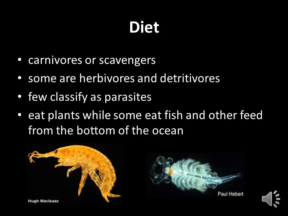 Habitat Crustacea live in: Oceans Fresh water Land Many crustaceans are nocturnal They spend their days hidden in a burrow, buried in the sand or slee
