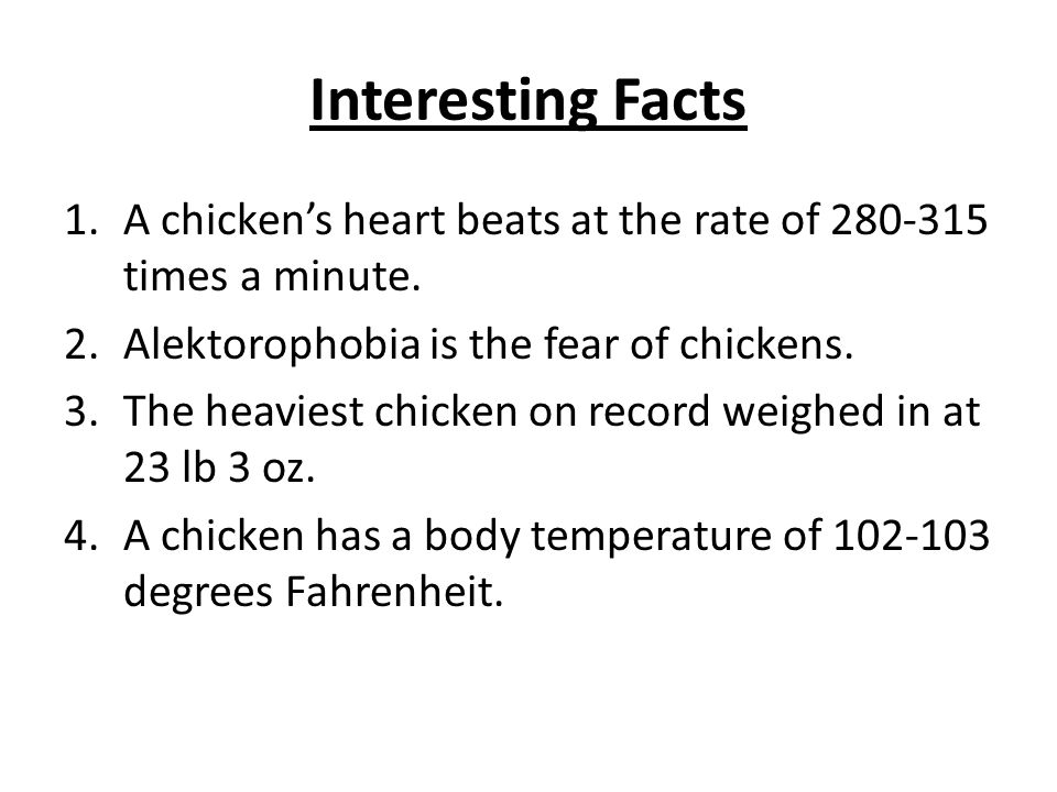Interesting Facts 1.A chickens heart beats at the rate of 280-315 times a minute. 2.Alektorophobia is the fear of chickens. 3.The heaviest chicken on