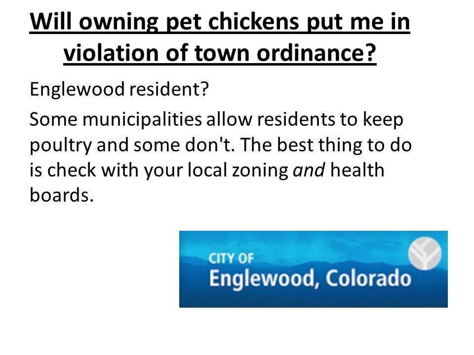 Will owning pet chickens put me in violation of town ordinance? Englewood resident? Some municipalities allow residents to keep poultry and some don't