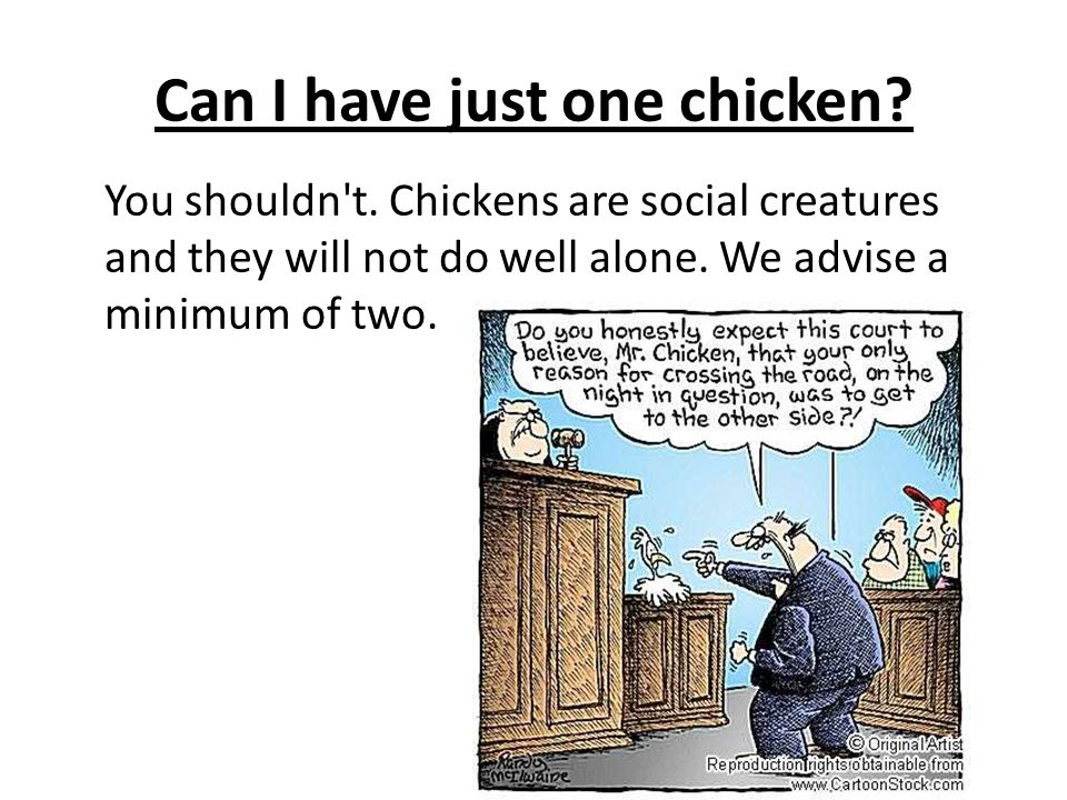 Can I have just one chicken? You shouldn't. Chickens are social creatures and they will not do well alone. We advise a minimum of two.