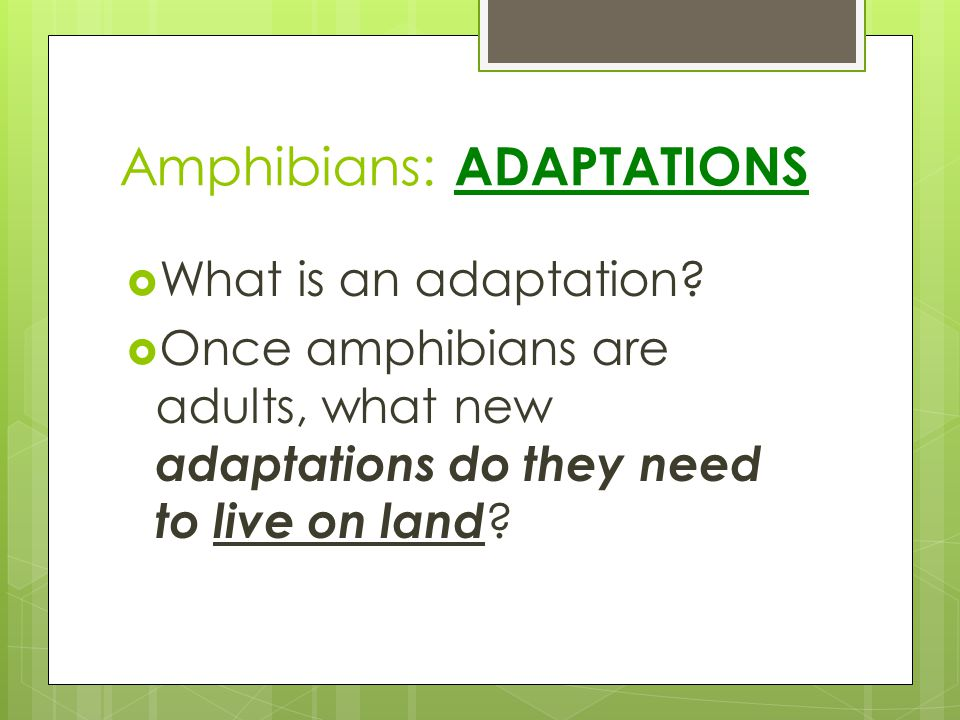 Amphibians: ADAPTATIONS What is an adaptation? Once amphibians are adults, what new adaptations do they need to live on land ?