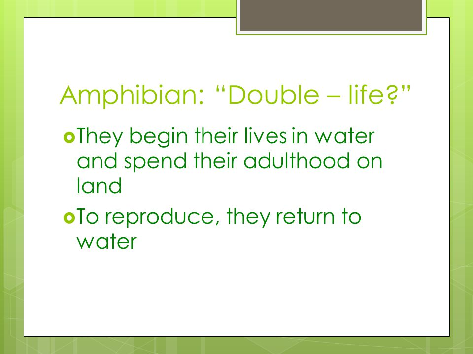 Amphibian: Double – life? They begin their lives in water and spend their adulthood on land To reproduce, they return to water