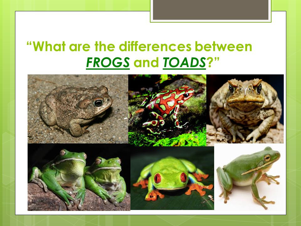 What are the differences between FROGS and TOADS ?