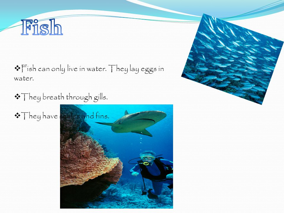 Fish can only live in water.They lay eggs in water.