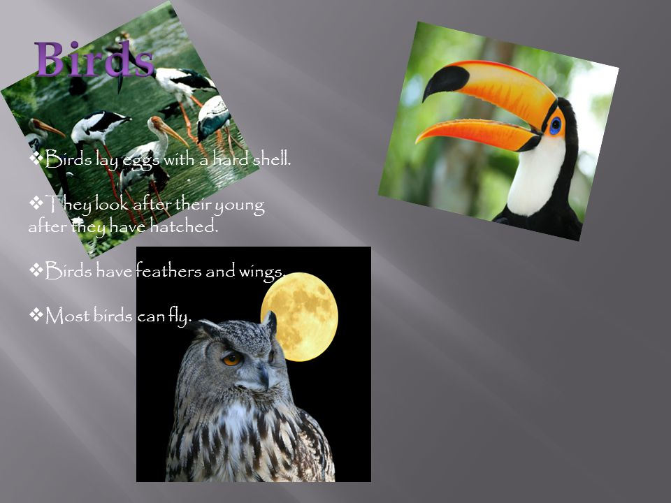Birds lay eggs with a hard shell.They look after their young after they have hatched.