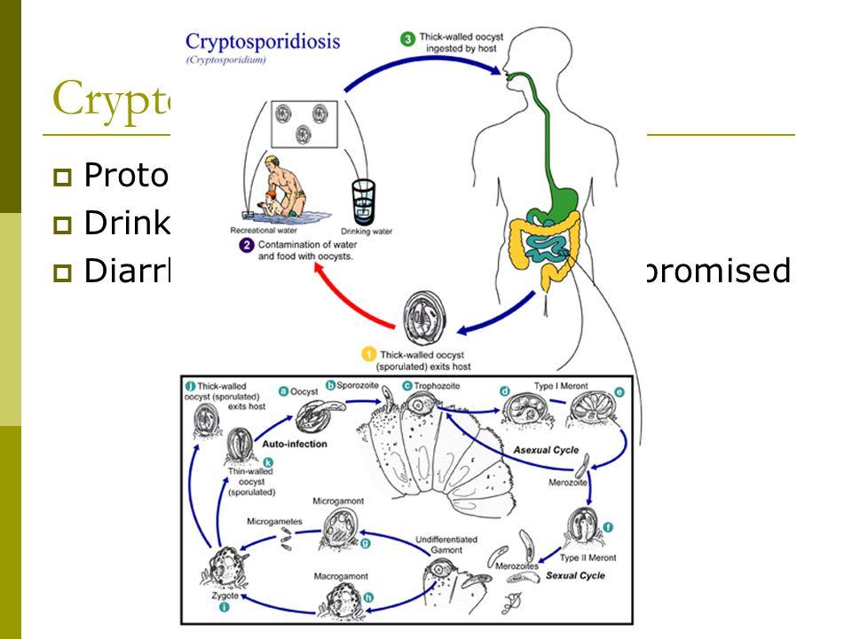 Chapter 15: Phylum Nematoda: The Roundworms