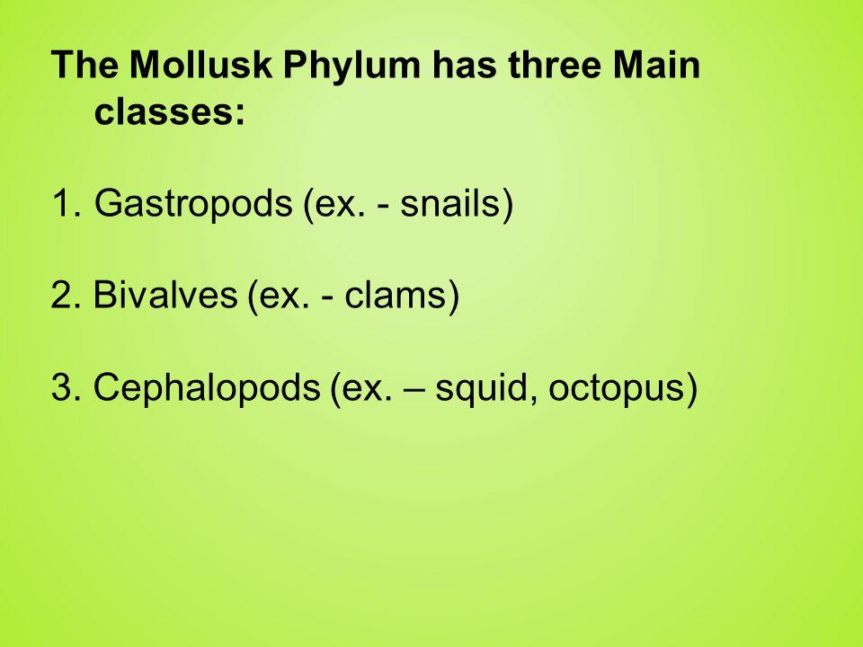 The Mollusk Phylum has three Main classes: 1. Gastropods (ex. - snails) 2. Bivalves (ex. - clams) 3. Cephalopods (ex. – squid, octopus)