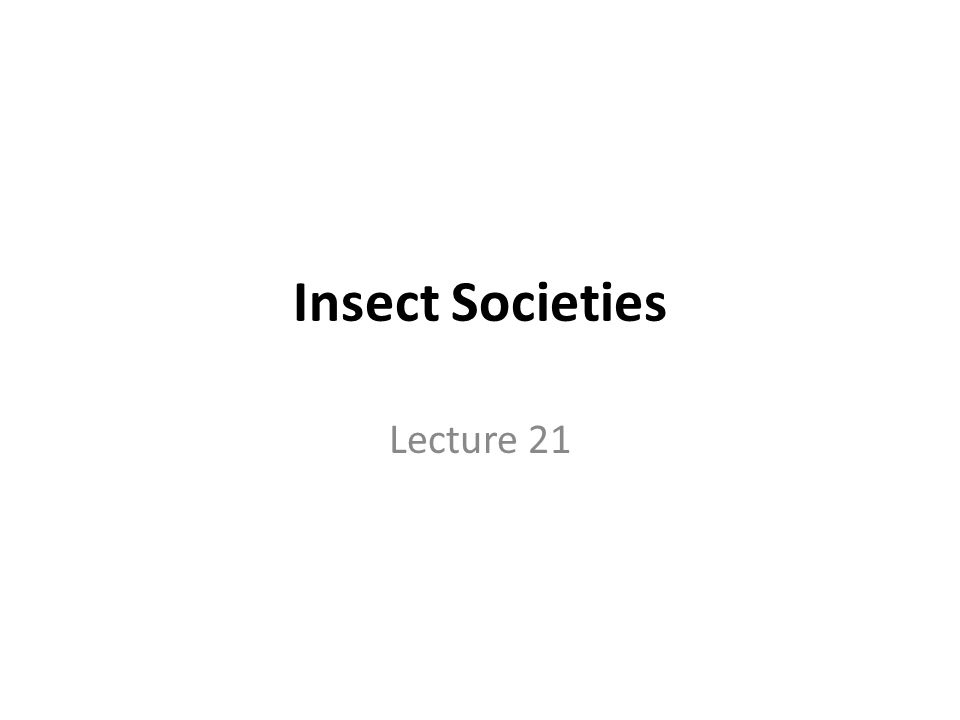 Insect Societies Lecture 21