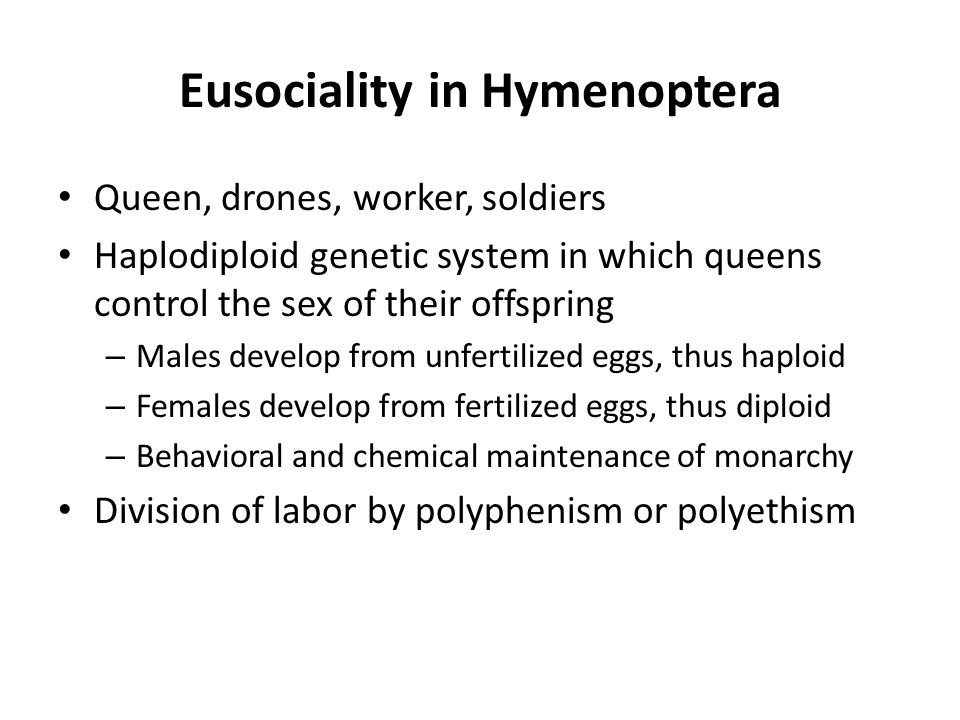 Eusociality in Hymenoptera Queen, drones, worker, soldiers Haplodiploid genetic system in which queens control the sex of their offspring – Males deve