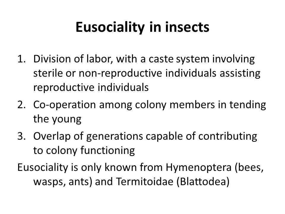 Eusociality in insects 1.Division of labor, with a caste system involving sterile or non-reproductive individuals assisting reproductive individuals 2