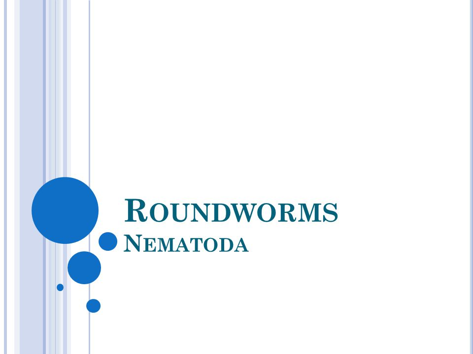 R OUNDWORMS N EMATODA
