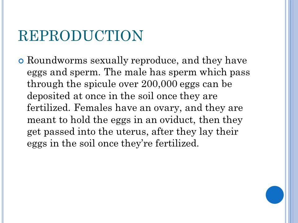 REPRODUCTION Roundworms sexually reproduce, and they have eggs and sperm. The male has sperm which pass through the spicule over 200,000 eggs can be d