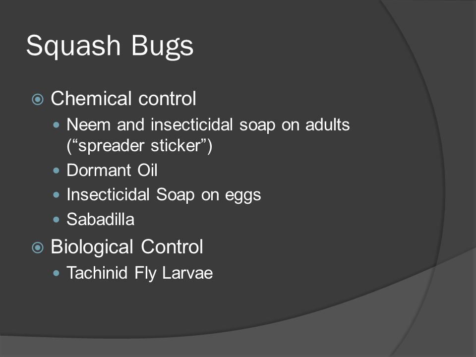 Squash Bugs Chemical control Neem and insecticidal soap on adults (spreader sticker) Dormant Oil Insecticidal Soap on eggs Sabadilla Biological Contro