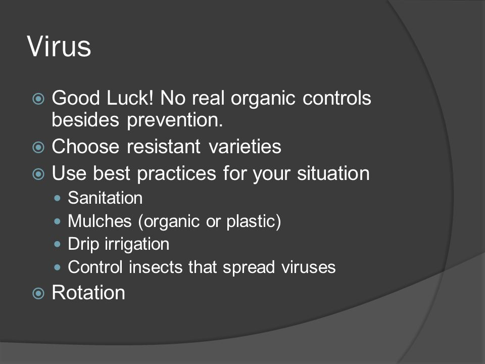 Virus Good Luck! No real organic controls besides prevention. Choose resistant varieties Use best practices for your situation Sanitation Mulches (org