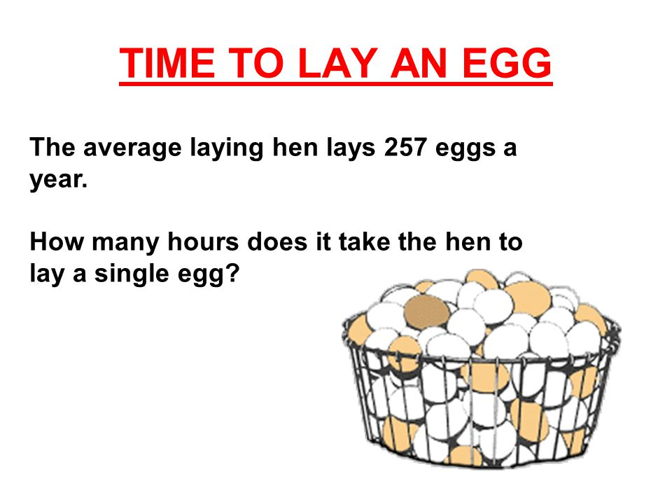 TIME TO LAY AN EGG To answer the question, you need to do these math problems: 365 (days in a year) times 24 (hours in a day) = X (hours in a year) X (hours in a year) divided by 257 (eggs laid in a year) = Y (hours to lay one egg)
