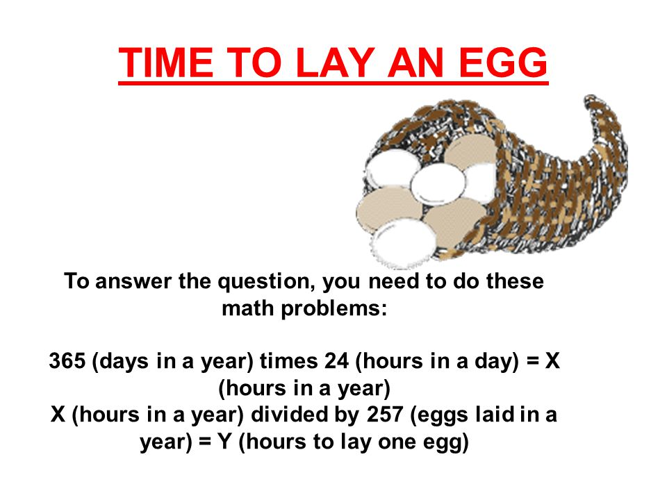 The answers to the math problems are: X = 8,760 hours in a year Y = about 34 (34.085603) hours to lay one egg The actual time it takes for a hen to make an egg and lay it is 24 to 26 hours.