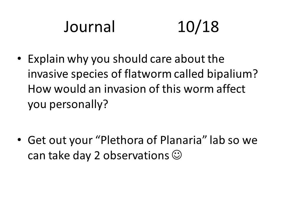 UNIT 3A- PHYLUM PLATYHELMINTHES Parasitic Flukes & Tapeworms