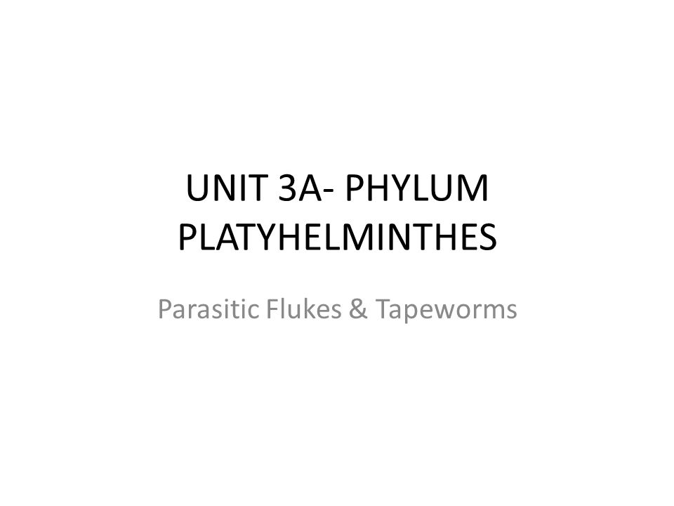UNIT 3A- PHYLUM PLATYHELMINTHES Parasitic Flukes & Tapeworms