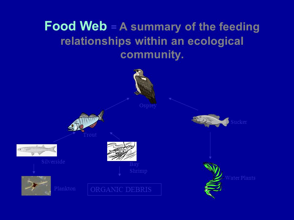 Food Web = A summary of the feeding relationships within an ecological community. ORGANIC DEBRIS Osprey Water Plants Sucker Bay Shrimp Trout Plankton