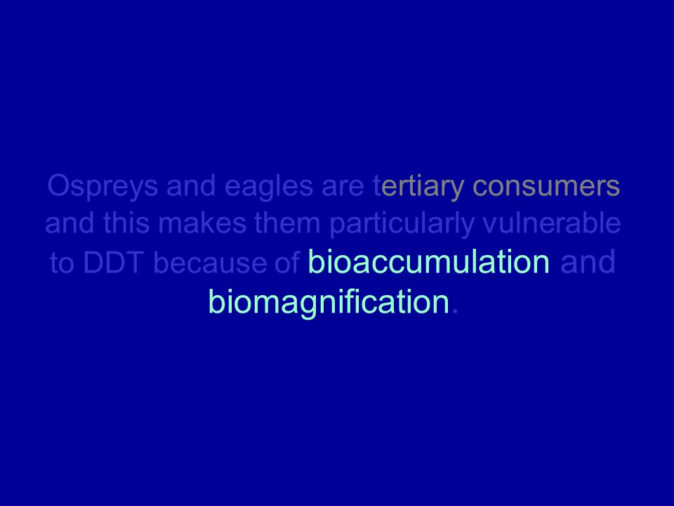 Ospreys and eagles are tertiary consumers and this makes them particularly vulnerable to DDT because of bioaccumulation and biomagnification.