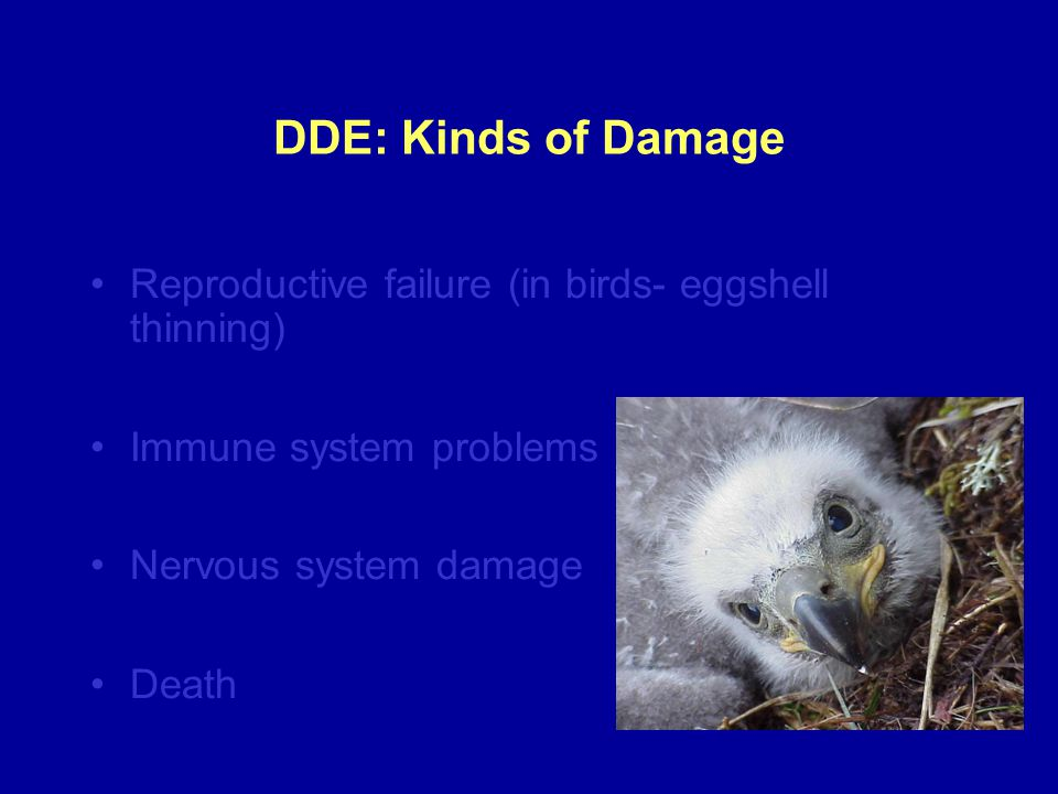 DDE: Kinds of Damage Reproductive failure (in birds- eggshell thinning) Immune system problems Nervous system damage Death