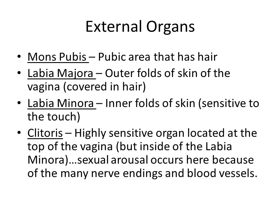 External Organs Mons Pubis – Pubic area that has hair Labia Majora – Outer folds of skin of the vagina (covered in hair) Labia Minora – Inner folds of skin (sensitive to the touch) Clitoris – Highly sensitive organ located at the top of the vagina (but inside of the Labia Minora)…sexual arousal occurs here because of the many nerve endings and blood vessels.