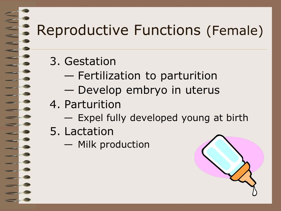 Reproductive Functions (Female) 3. Gestation Fertilization to parturition Develop embryo in uterus 4. Parturition Expel fully developed young at birth