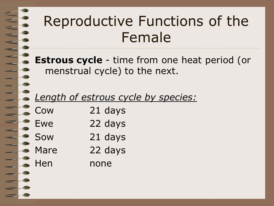 Reproductive Functions of the Female Estrous cycle - time from one heat period (or menstrual cycle) to the next. Length of estrous cycle by species: C
