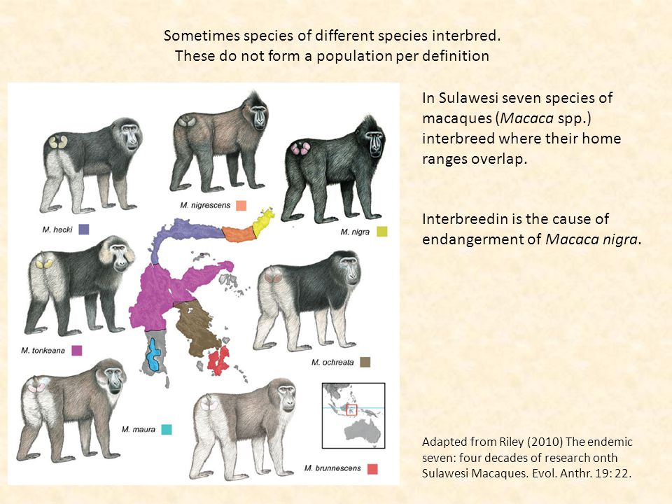 Sometimes species of different species interbred. These do not form a population per definition In Sulawesi seven species of macaques (Macaca spp.) in