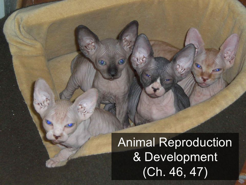 Animal Reproduction & Development (Ch. 46, 47)