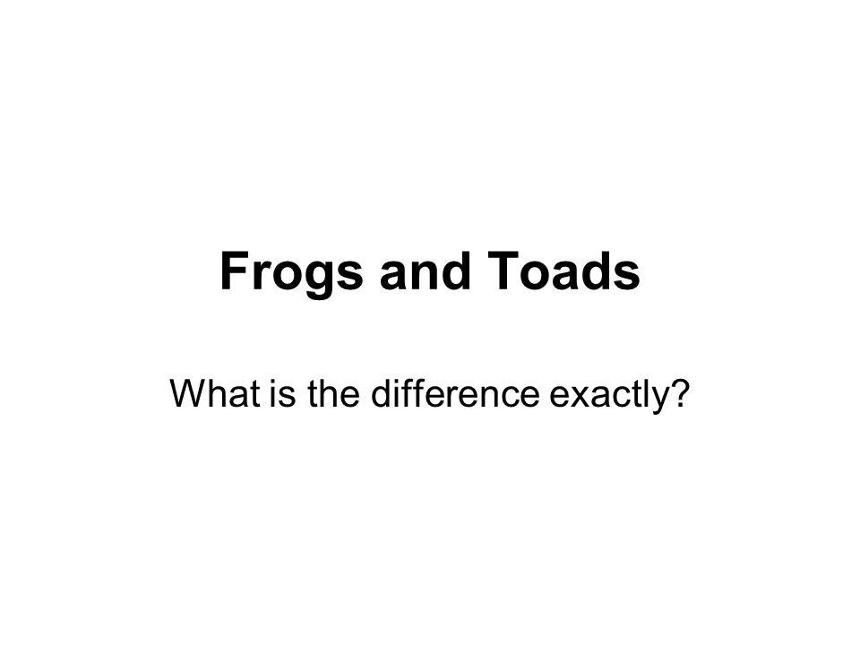Frogs and Toads What is the difference exactly?