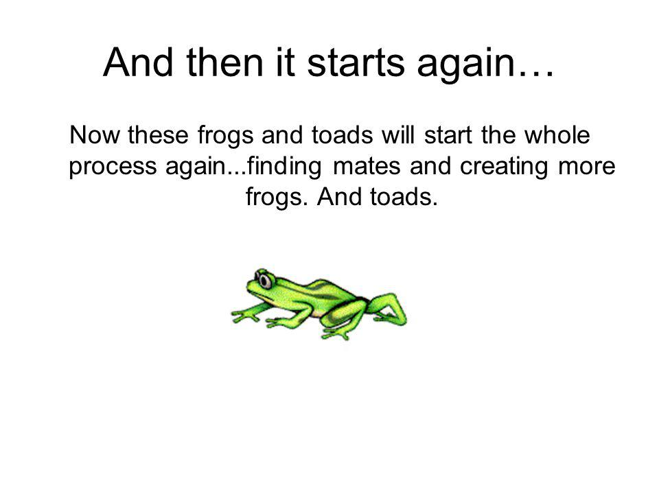 And then it starts again… Now these frogs and toads will start the whole process again...finding mates and creating more frogs. And toads.