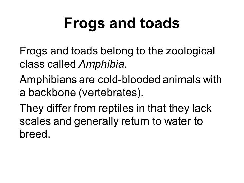Frog And Toad Differences Crazywidowfo