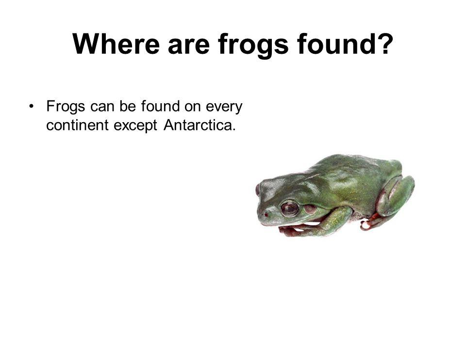 Where are frogs found? Frogs can be found on every continent except Antarctica.