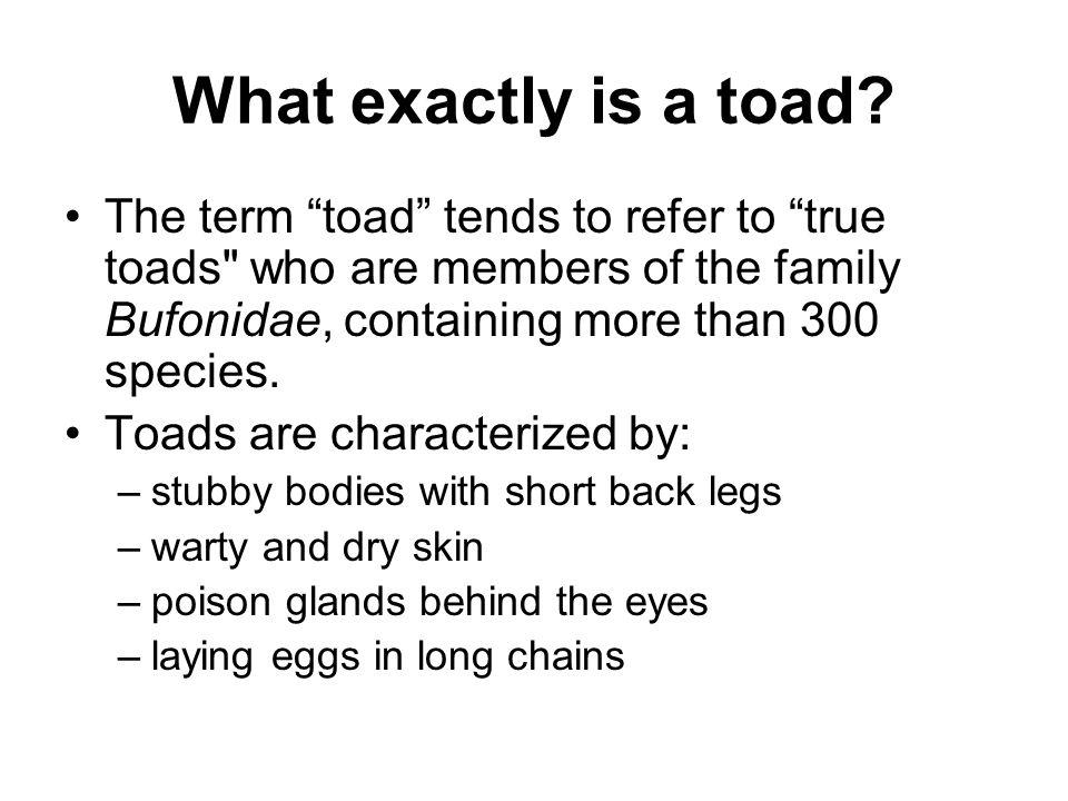 What exactly is a toad? The term toad tends to refer to true toads