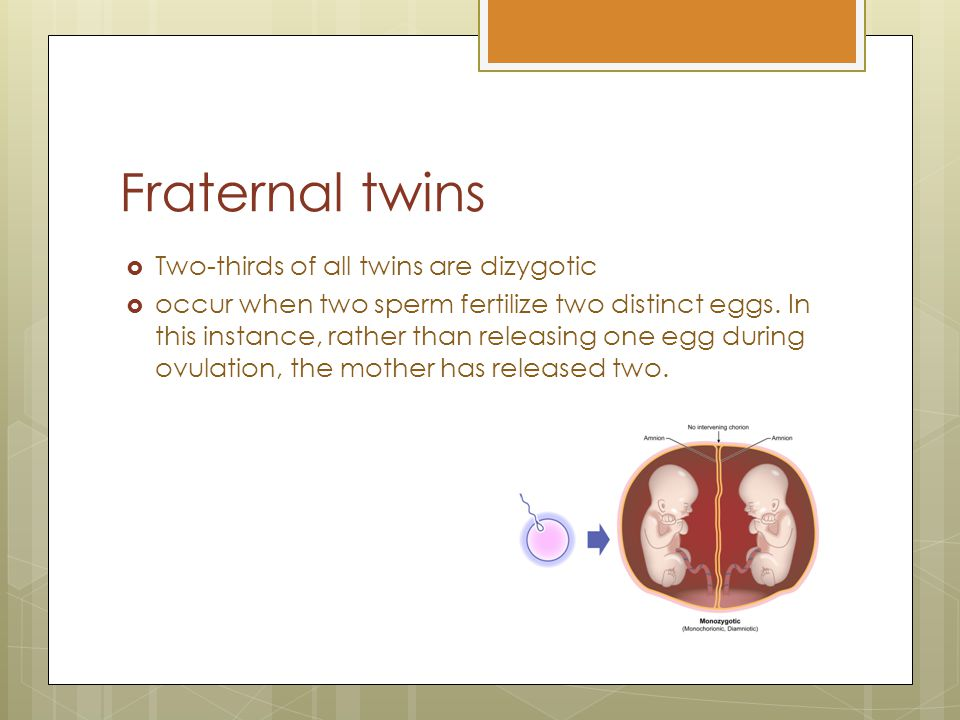 Fraternal twins Fertilisation of two separate ovum results in two distinct embryos.