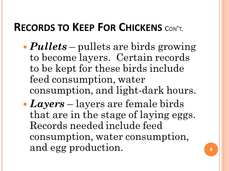R ECORDS TO K EEP F OR C HICKENS C ON T. Pullets – pullets are birds growing to become layers. Certain records to be kept for these birds include feed