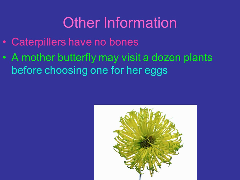 How long they live and how they are born Butterflies lay their eggs only on plants Has yolk inside each egg