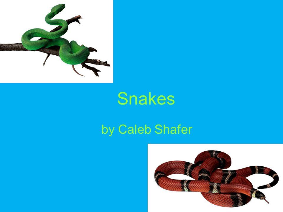 Bibliography Snakes www.kidsplanet.org