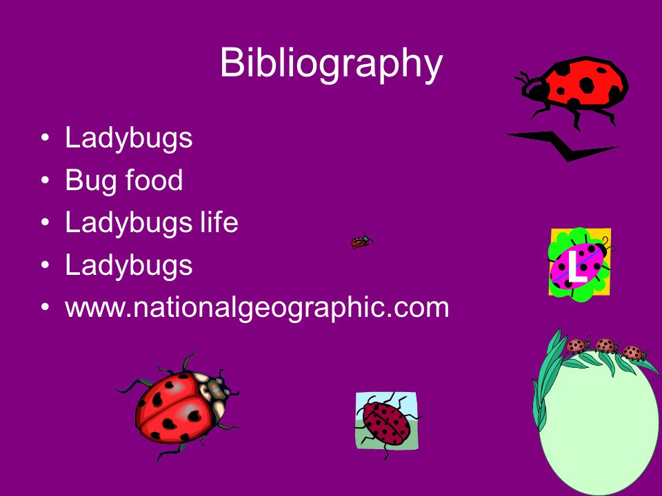 Other interesting facts Play dead No ears Are beetles Do not taste good Can swim 5,000 different species of ladybugs