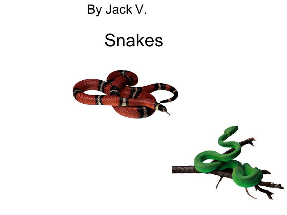 Snakes By Jack V.