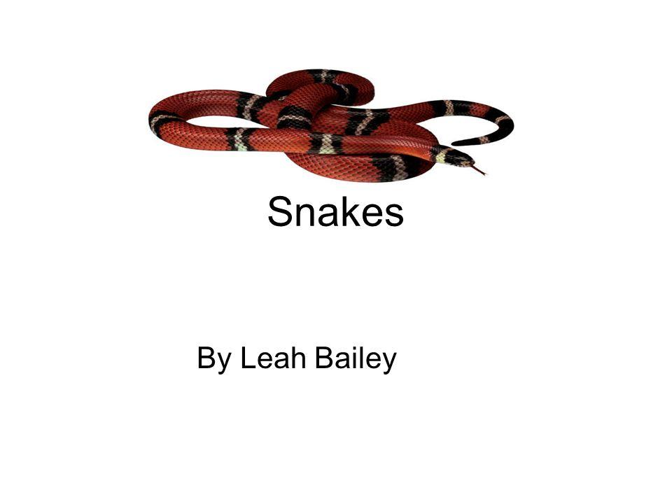 Bibliography The snake www.kidsplanet.org Snakes