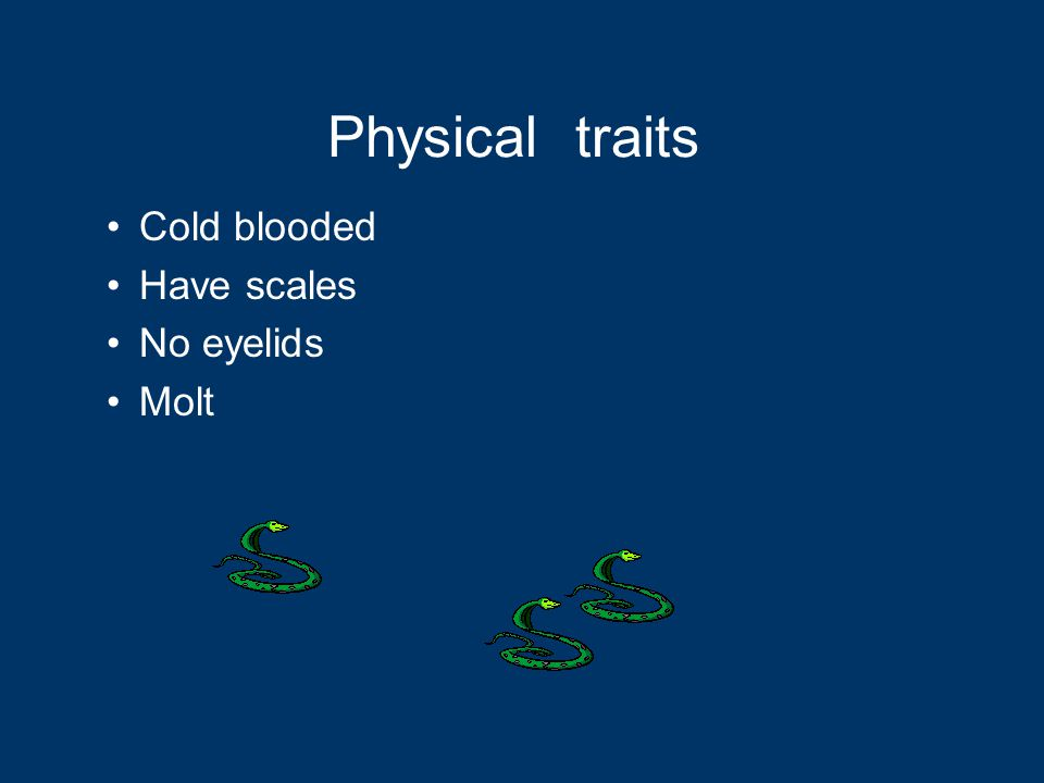 Physical traits Cold blooded Have scales No eyelids Molt