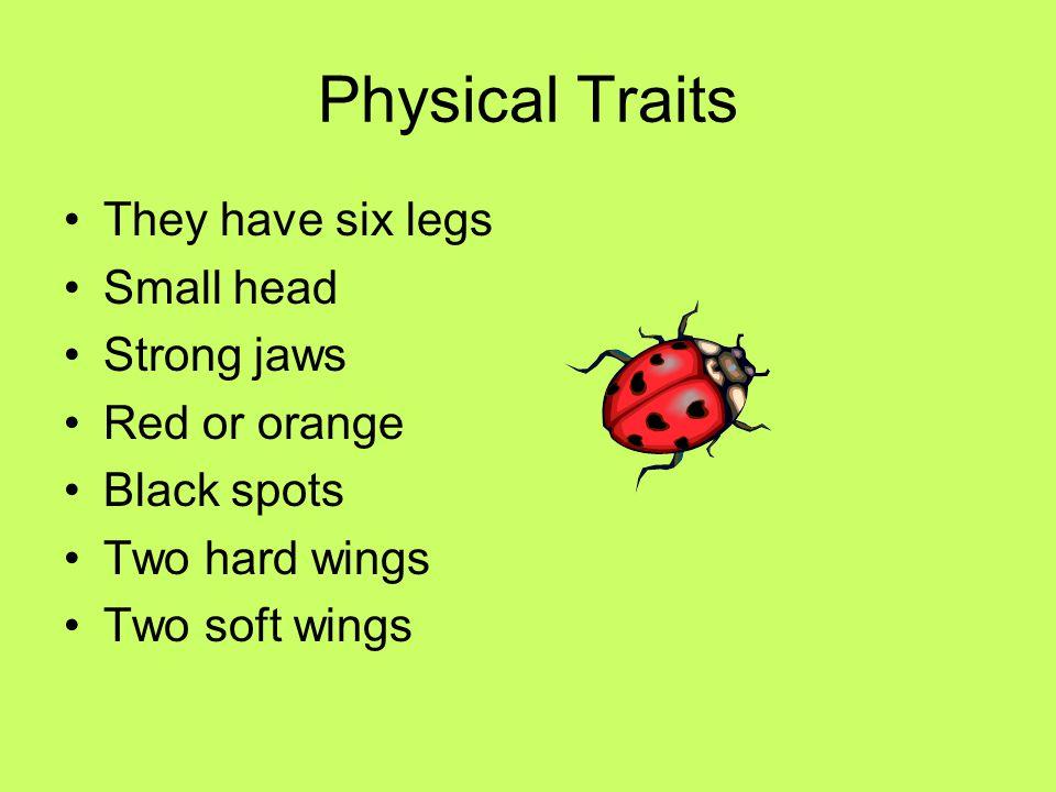 Ladybugs By Brooke Madden!