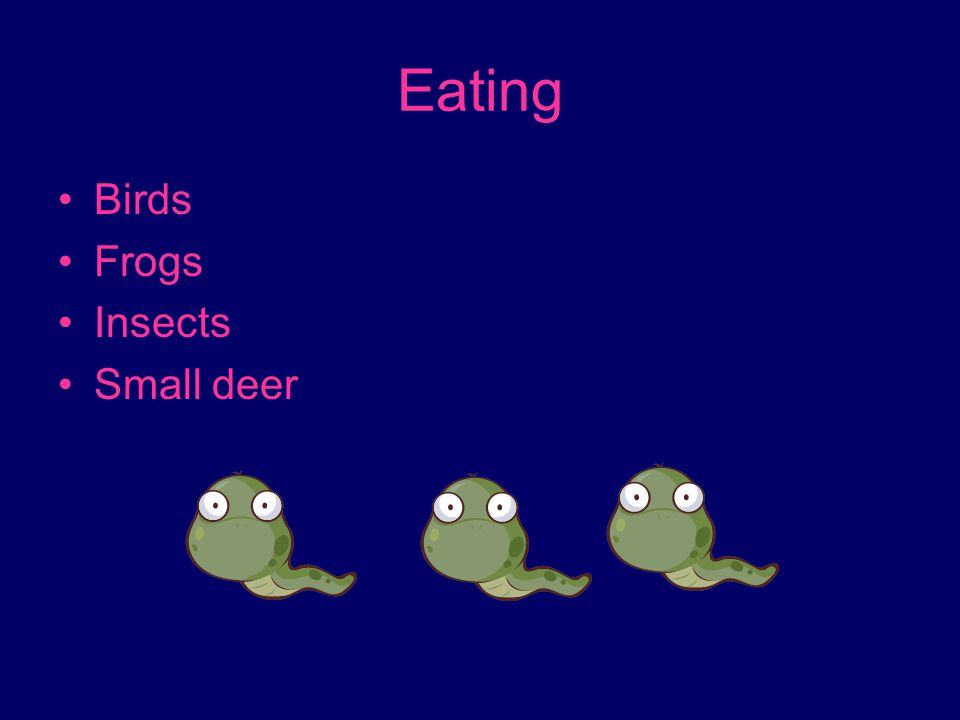 Eating Birds Frogs Insects Small deer
