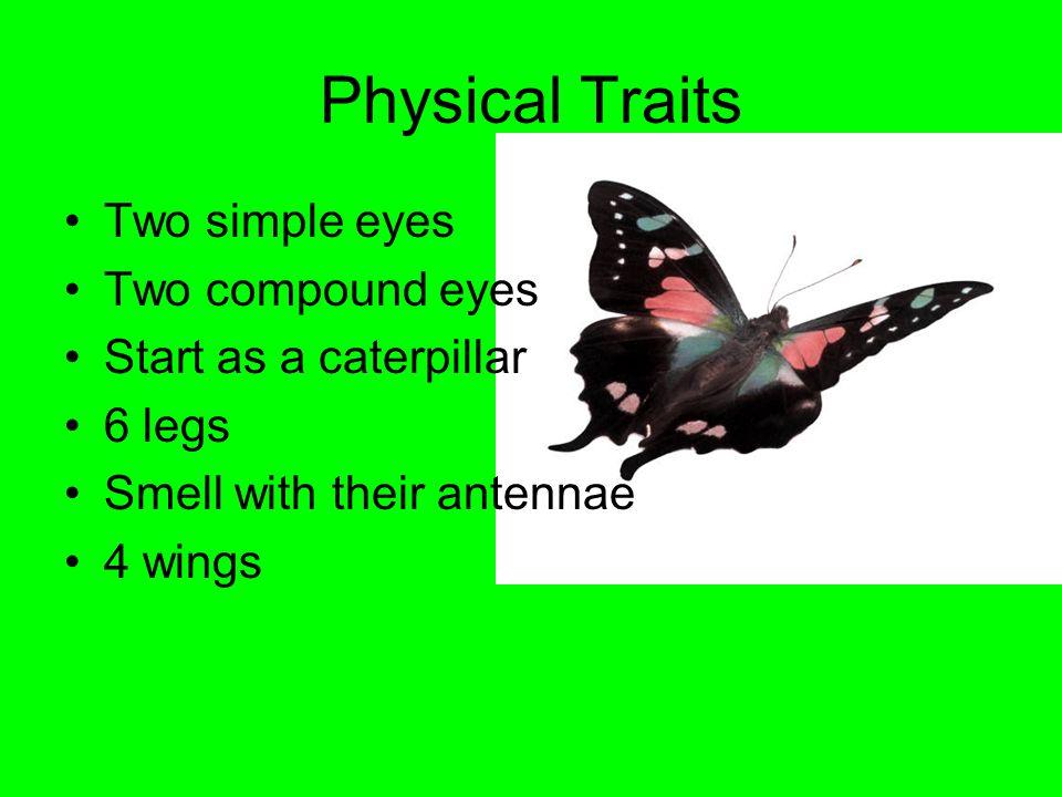 Butterflies By Emerson Driscoll