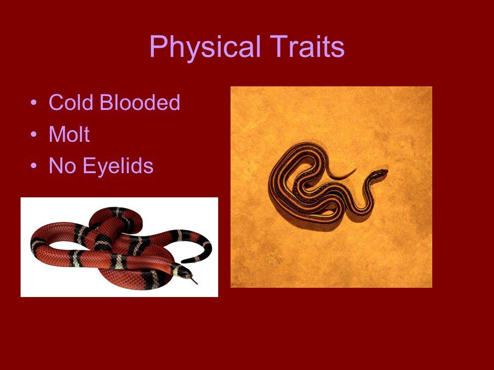 Snakes Dylan Buchanan