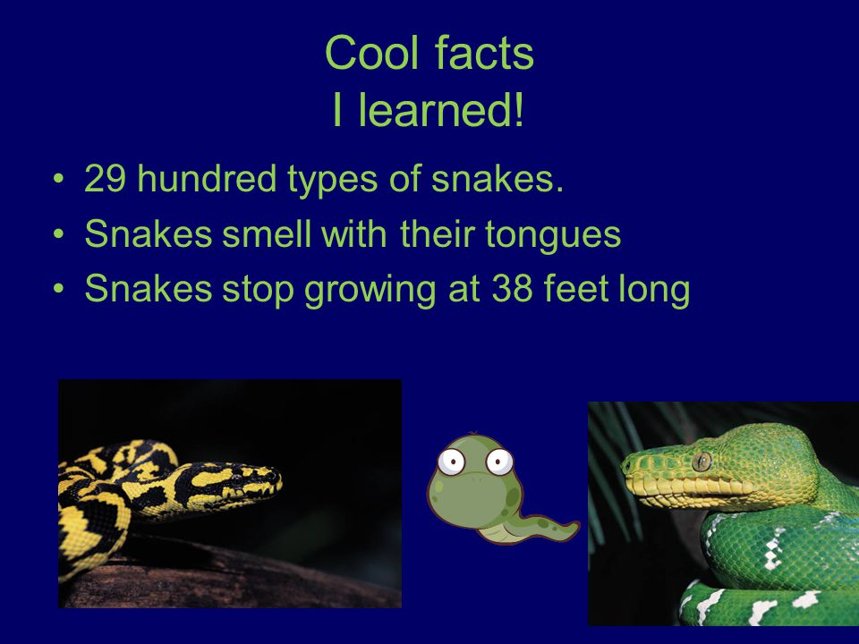 Where they live Snakes live in rocky mountains Snakes like to live in cold places Live in caves